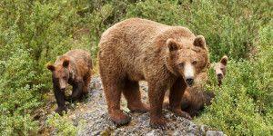 osos-piedras
