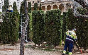 Limpieza y repoblación de cipreses y bog en los jardines del palacio del Infantado