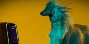 sony lanza una primicia mundial los perros prefieren beyonce a beethoven | Liberal de Castilla