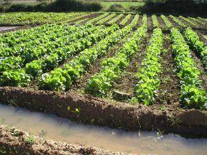 ayudas-agricultura-ecologica