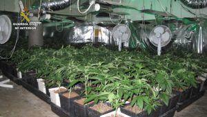 Marihuana localizada en Cabanillas.