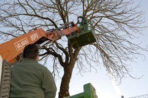 Tala preventiva de un árbol centenario del jardín de Diputación de Cuenca ante el peligro de caída