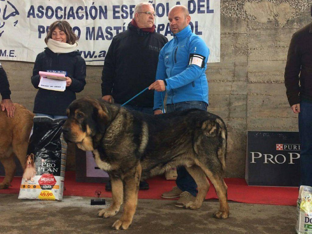 FILANDÓN | Liberal de Castilla