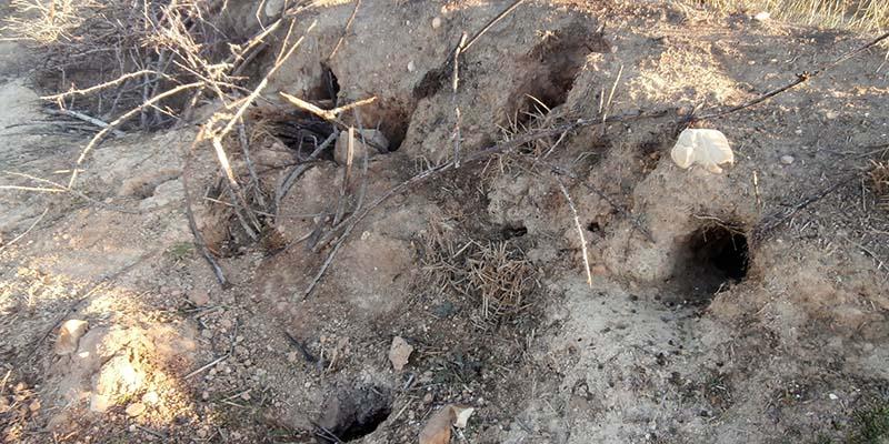 Unión de Uniones demandará en Cuenca soluciones a los daños agrícolas por fauna silvestre en el Día de Castilla-La Mancha