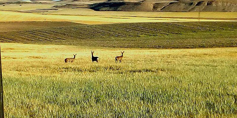 ASAJA Cuenca urge a Agricultura a agilizar la declaración de comarca de emergencia cinegética temporal en Cuenca