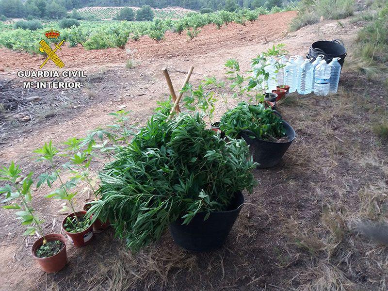 La Guardia Civil detiene a una persona por cultivar 141 plantas de marihuana