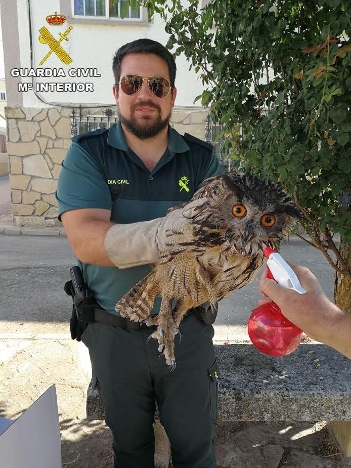 La Guardia Civil recupera un Búho Real en Sacecorbo