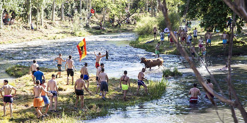 Las 'Vacas por el Tajo' atraen a cerca de 8.000 personas a Trillo