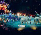 La Asociación de Circos Reunidos pide una reunión para intentar reconducir la decisión de la Junta