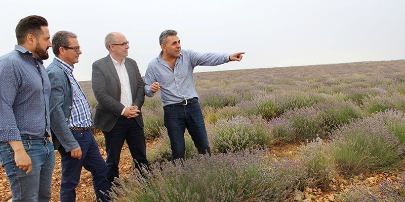 La Junta subvencionará por primera vez este año el cultivo de plantas aromáticas, dentro de las ayudas del Programa de Desarrollo Rural