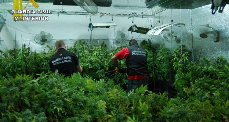 Detenido en El Casar por cultivar 3.410 plantas de marihuana en una vivienda unifamiliar