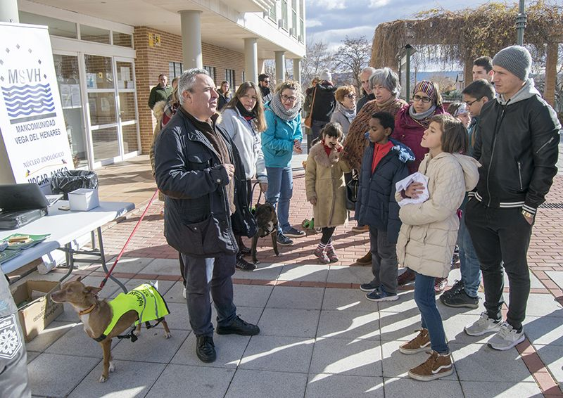 Hogar Amigo se presenta ante los cabanilleros en una charla explicativa con presencia de sus voluntarias y cuatro perros en adopción