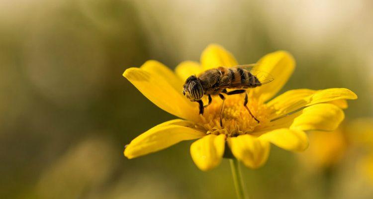 Los robos y la sequía ponen en jaque la producción de miel en la provincia de Cuenca