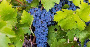 Uclés acoge una jornada divulgativa sobre la Sostenibilidad en el mundo del vino