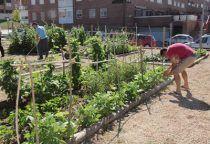 El Ayuntamiento de Cuenca adjudica las 36 parcelas de los huertos sociales del barrio de Villa Román
