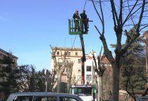 El Ayuntamiento de Cuenca lleva a cabo la campaña de poda de 35.000 árboles de la ciudad y pedanías