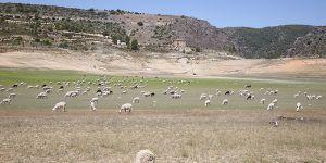 La Confederación Hidrográfica del Tajo alerta de que la cuenca está en sequía y avanza a situación de emergencia