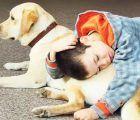 La Junta finaliza el borrador del anteproyecto de la Ley de Acceso al Entorno de Personas con Discapacidad Acompañadas de Perros de Asistencia