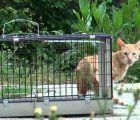 Una docena de voluntarios colaborarán en el plan de control de colonias felinas de Yebes y Valdeluz