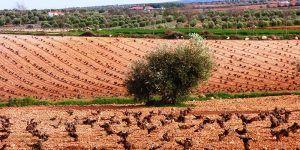 El PP celebra que el Gobierno de Rajoy reduzca, con especial incidencia en Cuenca, el IRPF a los agricultores y ganaderos