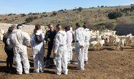 La Junta ha subvencionado la incorporación a la ganadería de 34 jóvenes de la provincia de Guadalajara