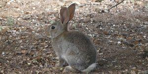 Unión de Uniones de Castilla-La Mancha apoya las reivindicaciones de la Plataforma de Afectados por la Plaga de Conejos