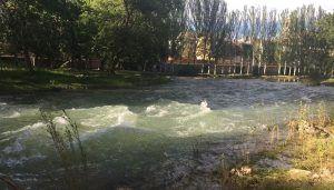 El Ayuntamiento de Trillo aplaza las Vacas por el Tajo por motivos de seguridad debido al caudal del Tajo