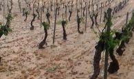 pide que se declare la zona agrícola afectada por el pedrisco del 2 de junio de 'especial calamidad'