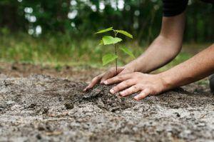 Yebes tendrá un equipo de voluntarios ambientales comprometidos con la mejora de los espacios verdes