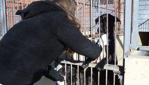 El Albergue Provincial de Animales de Cuenca ha entregado en adopción 55 perros en lo que llevamos de año
