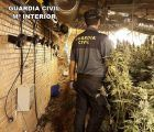 La Guardia Civil detiene a 5 personas e incauta 2.000 plantas de marihuana en Cabanillas y Torrejón del Rey