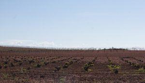 La Junta ha abonado ya más de 11 millones de euros para la reestructuración y reconversión del viñedo a más de un millar de agricultores