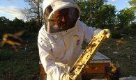 La miel alcarreña Nectarius, premiada en los Great Taste 2018, los 'Oscar' de la alimentación a nivel mundial