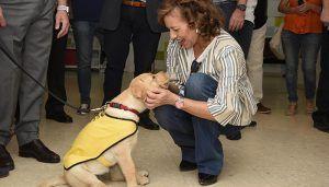 La Junta espera unanimidad en la aprobación de la nueva ley que ampliará el acceso al entorno de perros de asistencia