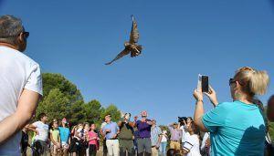 Liberados en su medio natural un total de cuatro búhos reales y un águila calzada rehabilitados en el Centro de Recuperación de Fauna Salvaje de Albaladejito