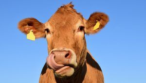 Unión de Uniones rechaza que los 2.000 ganaderos de leche de Castilla-La Mancha paguen una cuota interprofesional que sólo beneficia a la industria