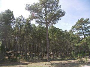 Castilla-La Mancha ha finalizado la campaña de incendios forestales con las segundas mejores cifras de los últimos veinte años