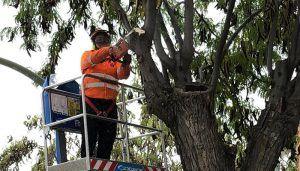 El Ayuntamiento de Guadalajara pone en marcha el plan de podas del arbolado de la ciudad