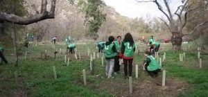 El domingo, en Castillejos, WWF llevará a cabo una nueva campaña de plantación para ayudar a la conservación del bosque de ribera