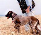 Encuentran en buen estado de salud al cazador desaparecido en Cantalojas