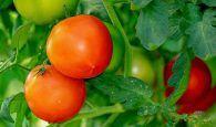 Investigadores de la UCLM y del CSIC diseñarán cultivos aptos para el clima futuro