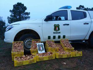Los agentes medioambientales alertan sobre las mafias altamente dañinas que trafican con setas