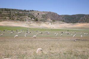 Unión de Uniones denuncia que el precio en origen de ovino-caprino ha caído más de un 9% en el último año