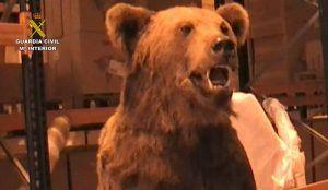 Golpe a la caza ilegal de animales exóticos guardaban sus trofeos en Fontanar