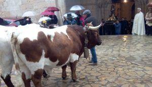 Brihuega celebra con sus tradicionales gachas la festividad de San Antón