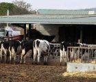 En Castilla-La Mancha en los últimos tres años han desaparecido casi la cuarta parte de las granjas de vacuno