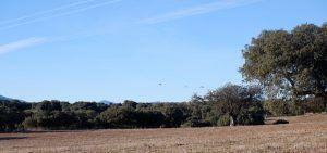 PEFC lanza un proyecto para mejorar el hábitat del águila imperial