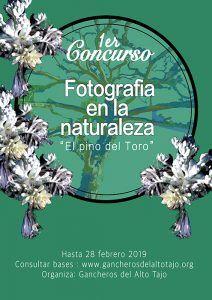 La Asociación de Municipios Gancheros del Alto Tajo convoca el concurso fotográfico El pino del toro