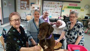 Cerca de 250 personas mayores han participado en el programa de Terapia Asistida con Perros del Gobierno de Castilla-La Mancha
