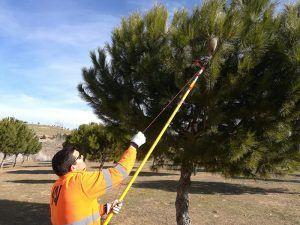 El Ayuntamiento de Guadalajara refuerza las actuaciones contra la procesionaria del pino